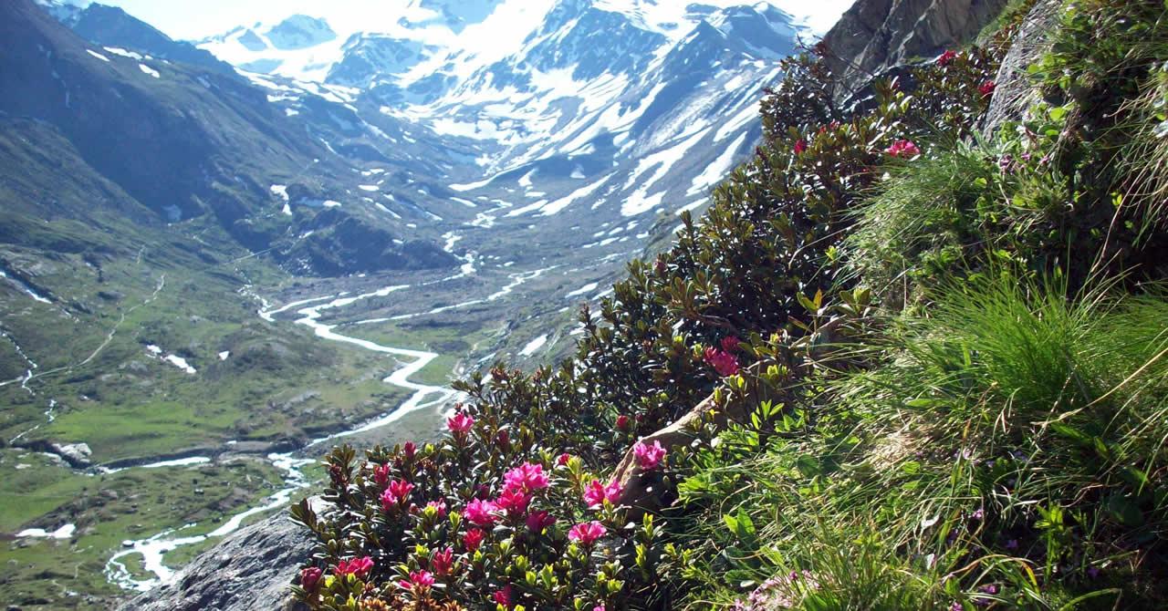 Parco Nazionale dello Stelvio - Hotel Miramonti - Val di Rabbi in Trentino b6531975dc6c